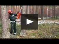 Embedded thumbnail for Increasing the amount of dry wood in the forest