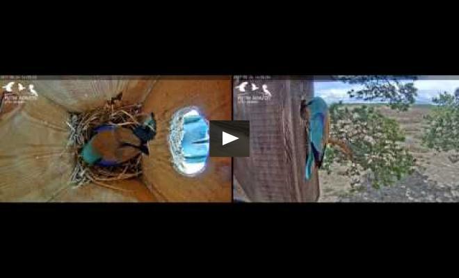 """Embedded thumbnail for Piedalāmies Aizsardzības ministrijas """"Drošajā teltī"""" festivālā """"Lampa"""""""