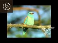 """Embedded thumbnail for LTV1 Vides Fakti: sižets par projekta """"Putni Ādažos"""" atklāšanu"""